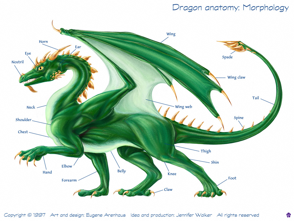 Dragons physionomie for Caracteristique anglais
